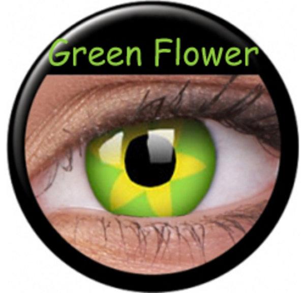CRAZY ČOČKY  (2ks, tříměsíční) - Green Flower